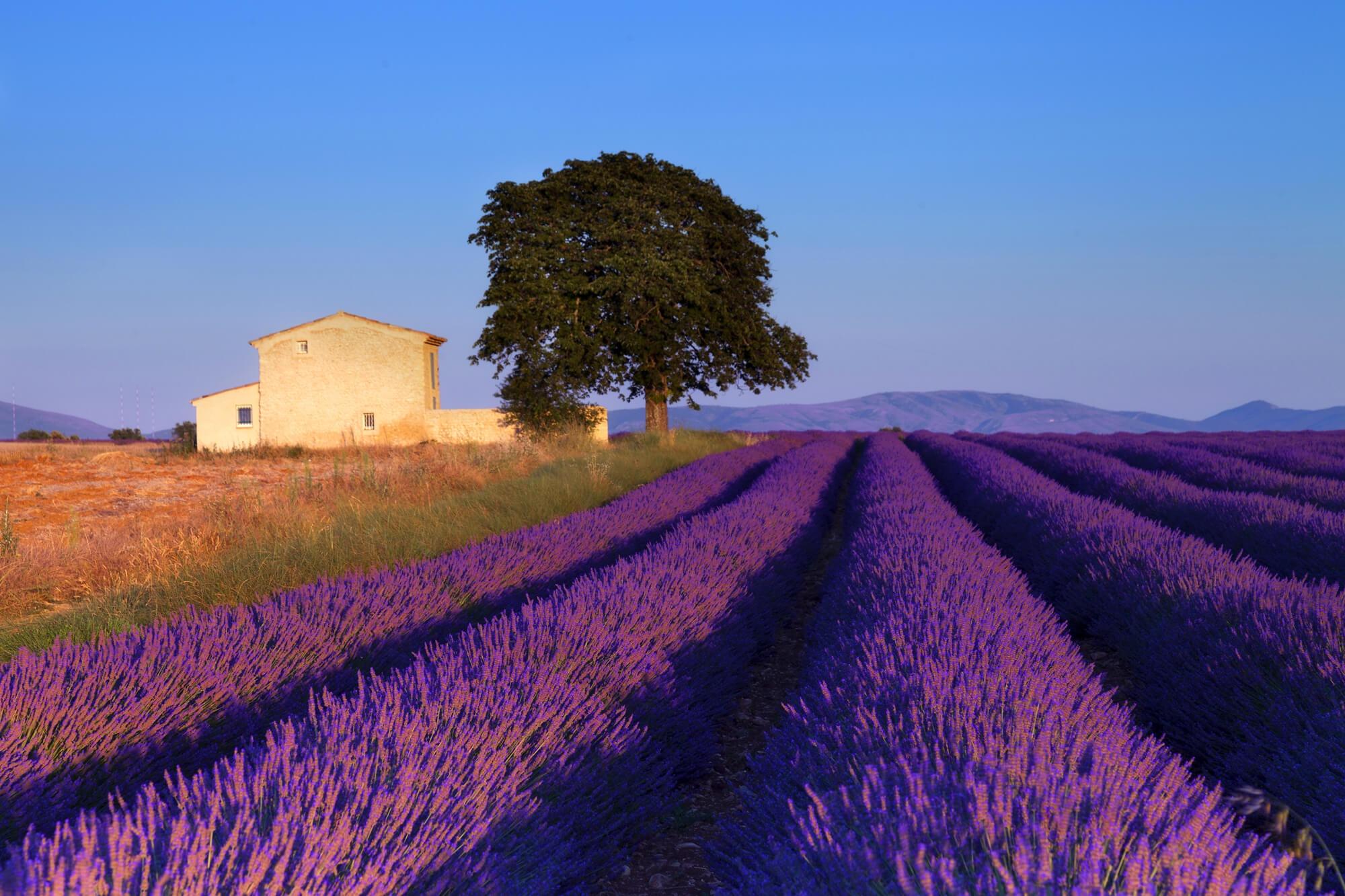 Produits de Provence en Savoie à Aix-les-Bains : Produits cosmétiques Aix-les-Bains : Les Univers de la beauté>